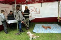 piknik-z-psem-21